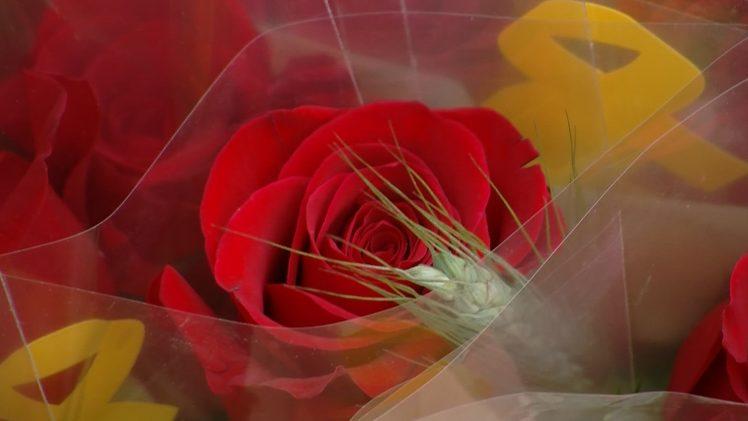Diada de Sant Jordi a les Borges Blanques