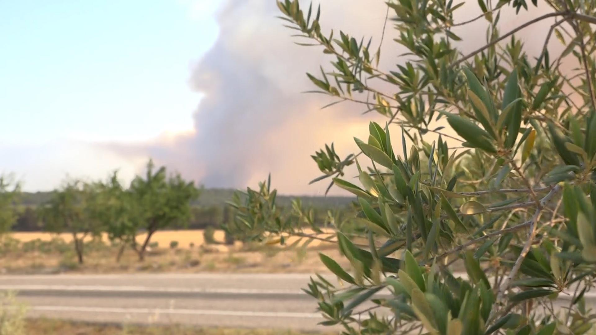El Departament d'Agricultura convoca els ajuts per l'incendi de la Ribera d'Ebre, les Garrigues i el Segrià