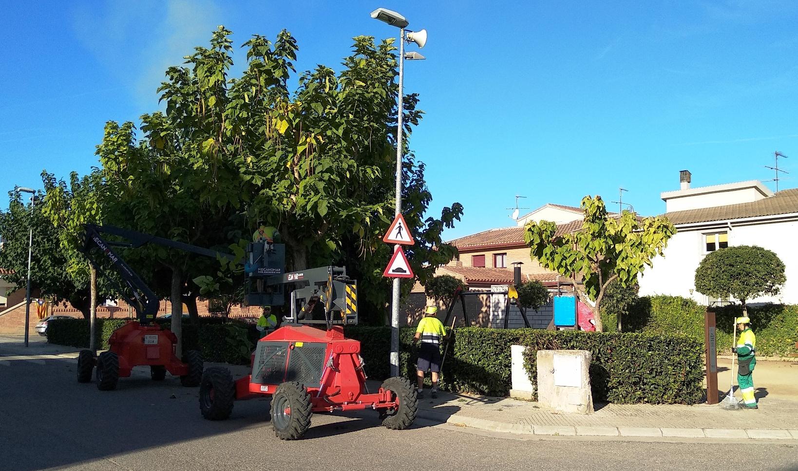 Les Borges esporga més de 700 arbres del municipi, i prova una nova tècnica ecològica