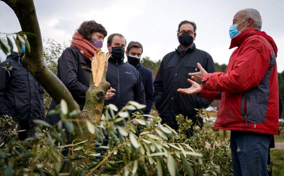 La consellera Jordà es compromet a buscar amb el sector de l'olivera solucions i mesures estructurals per fer front a episodis climàtics extrems